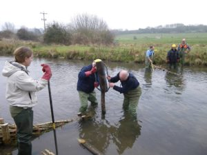 Freeman's Marsh Conservation Group Volunteers installing groynes, or water deflectors, in a river in Hungerford town and manor
