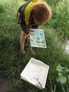 A Brownie identifies some of the creatures that live in our rivers