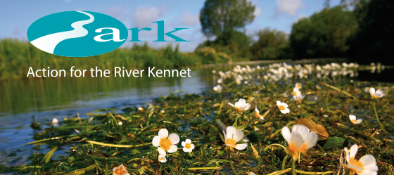 Action for River Kennet header, showing daisy-like flowers sitting on the surface of the river