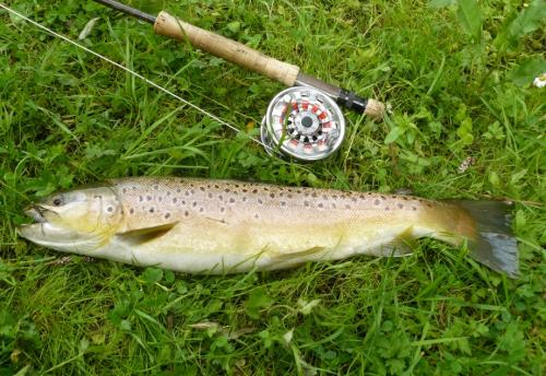 River Kennet Brown Trout small